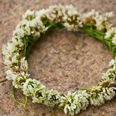 「クローバーの花飾り」の写真素材