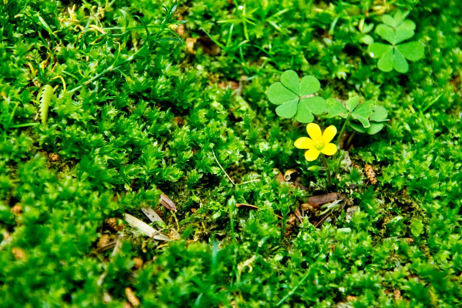 「緑の中の黄色い花」の写真