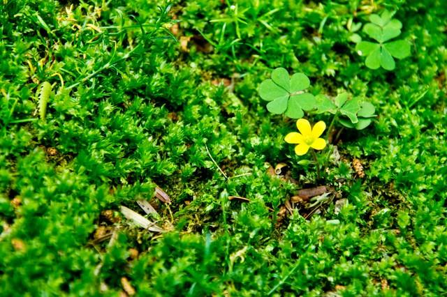 緑の中の黄色い花の写真