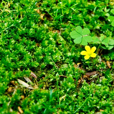 「緑の中の黄色い花」の写真素材