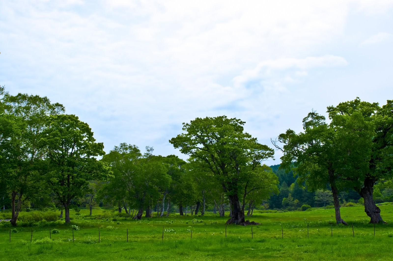 「奥志賀高原の森林奥志賀高原の森林」のフリー写真素材