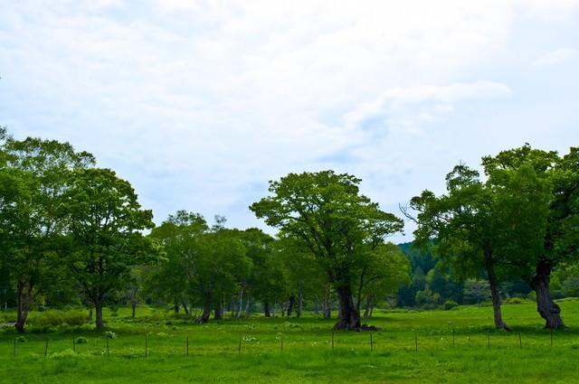 奥志賀高原の森林の写真