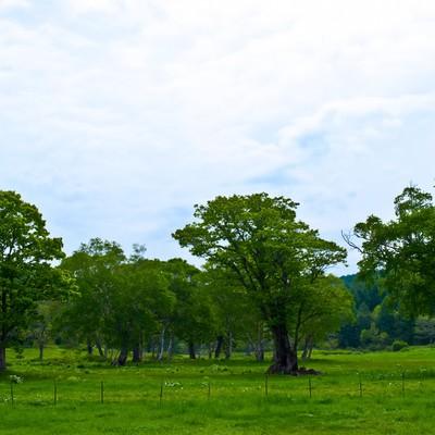 「奥志賀高原の森林」の写真素材