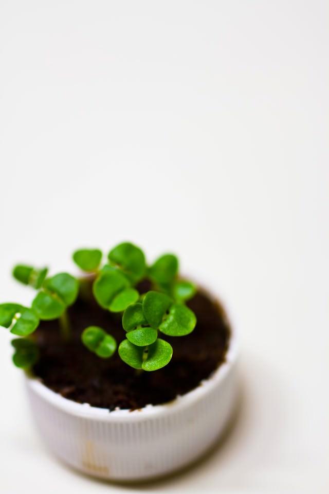 キャップに生える苗の写真