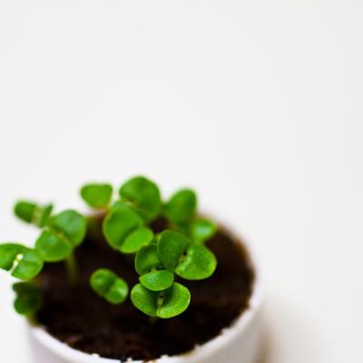 「キャップに生える苗」の写真素材