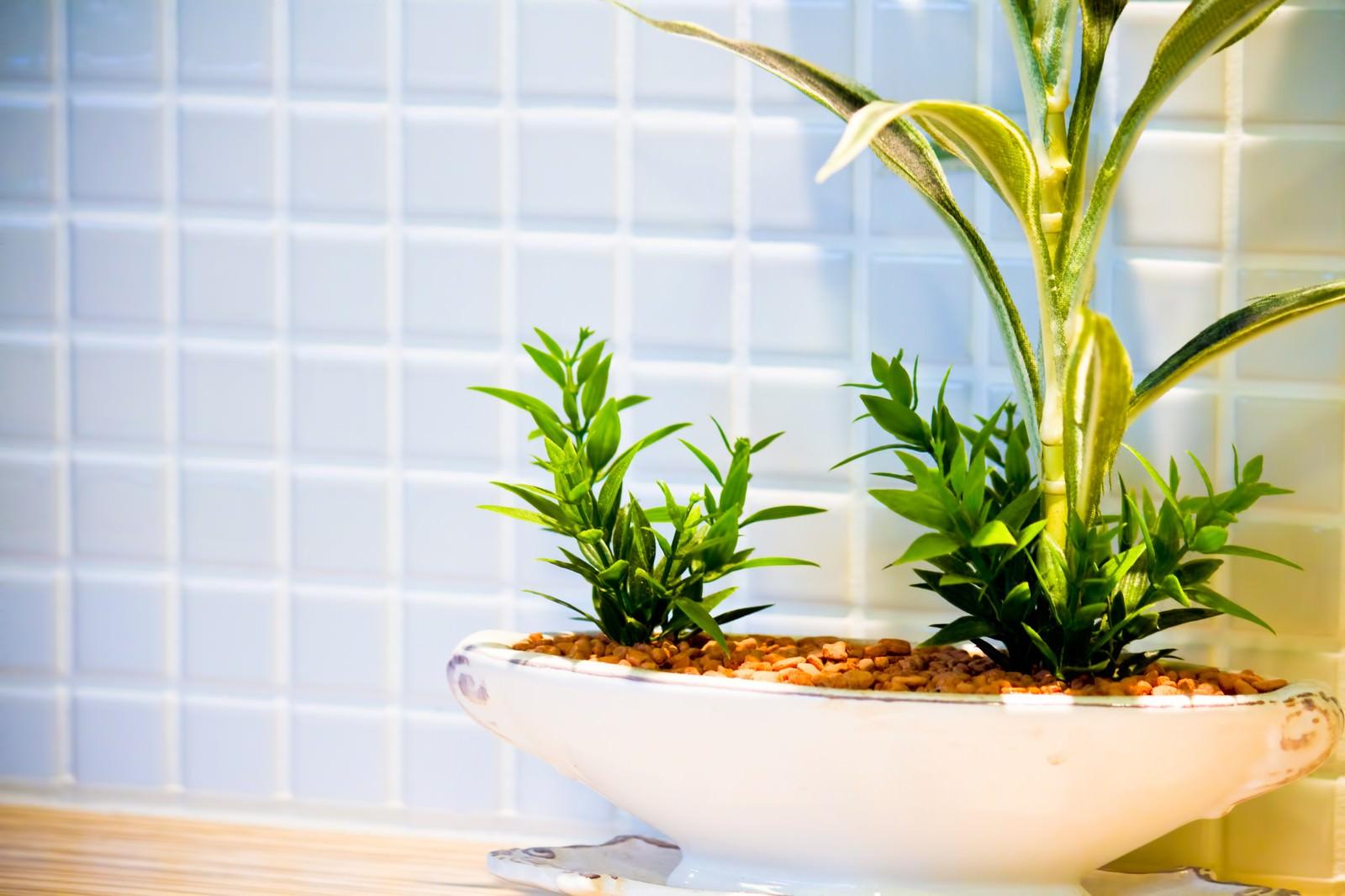「清潔感あるタイルと観葉植物」の写真