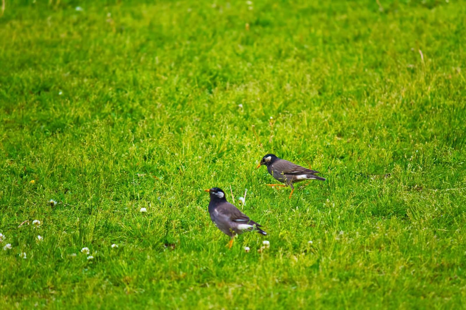 「小さな鳥のつがい小さな鳥のつがい」のフリー写真素材