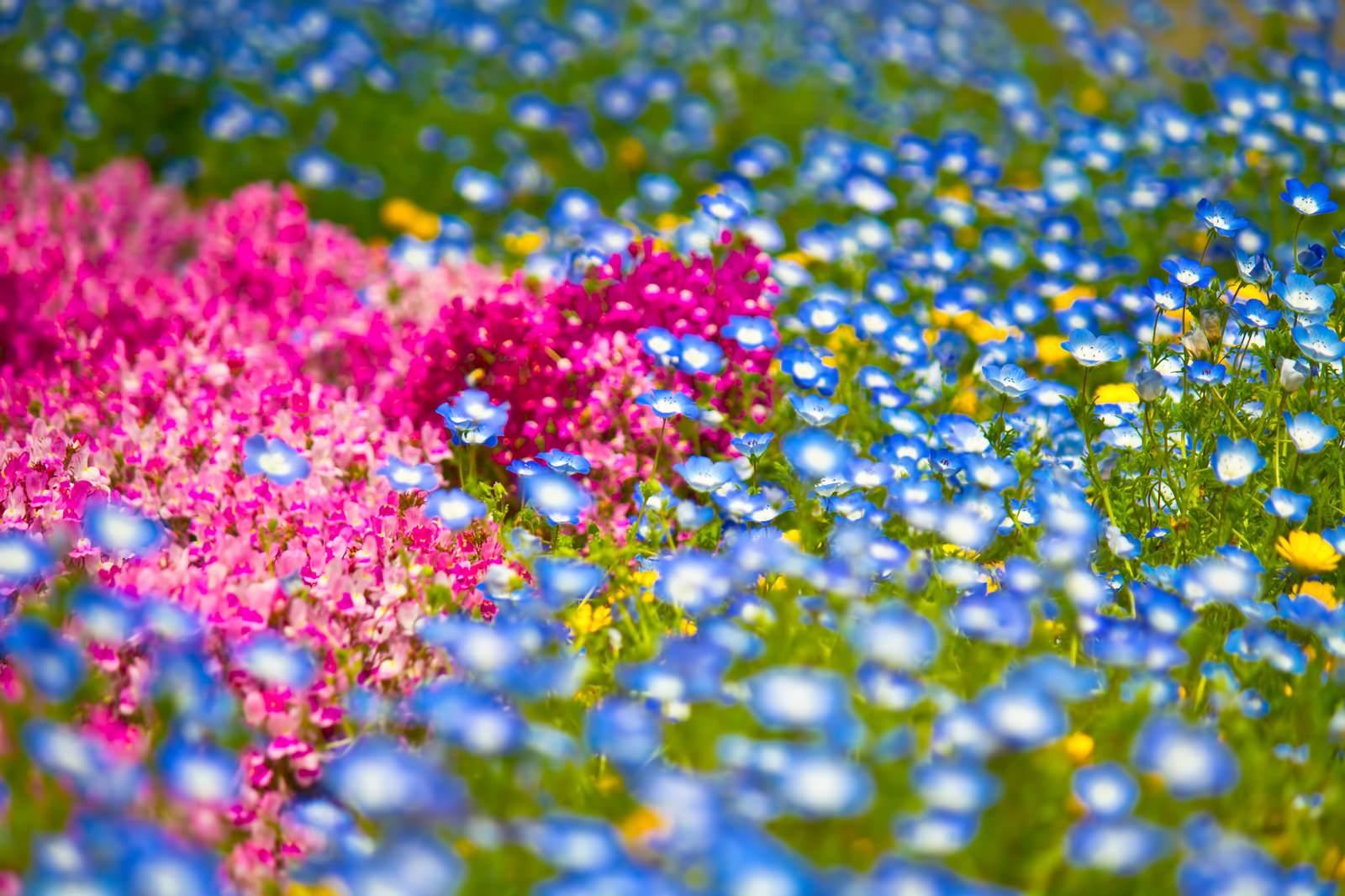 「山下公園の花壇の花々」の写真