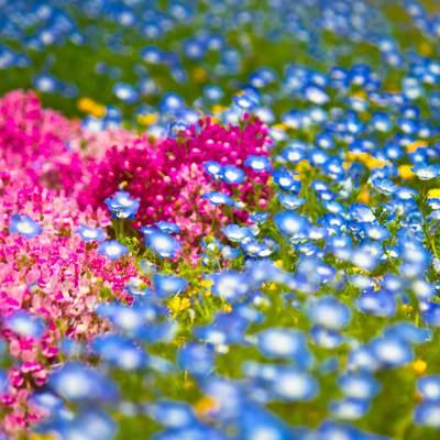 「山下公園の花壇の花々」の写真素材
