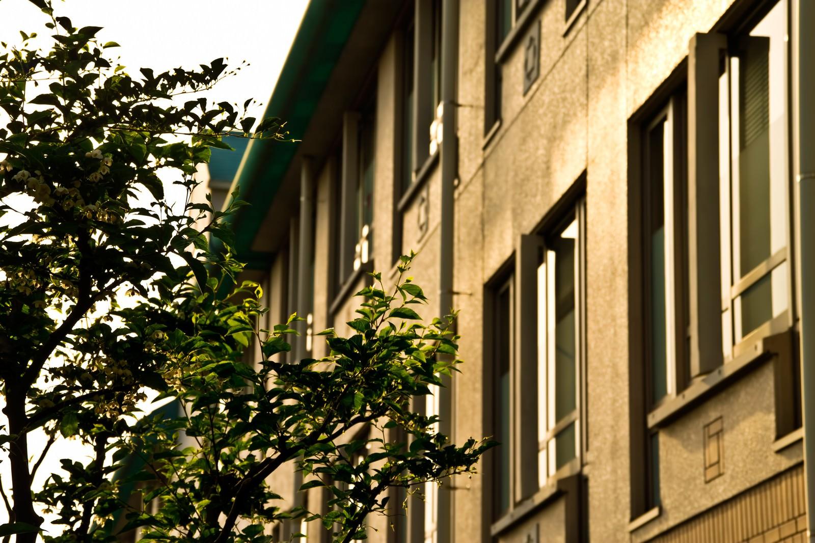 「夕暮れの学校校舎」の写真