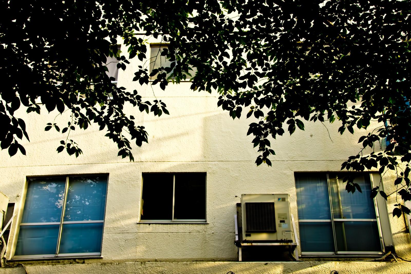 「夕暮れの校舎裏 | 写真の無料素材・フリー素材 - ぱくたそ」の写真