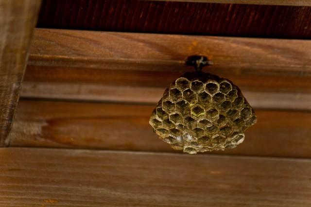 小さい蜂の巣の写真