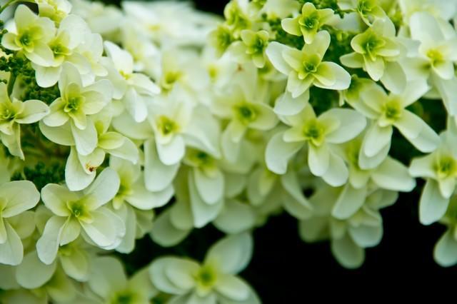 エメラルド色の花の写真