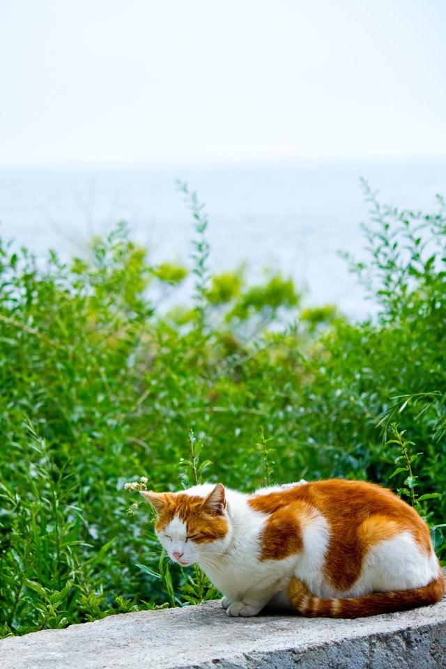 日向ぼっこ中の猫の写真