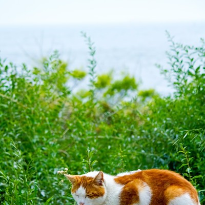 「日向ぼっこ中の猫」の写真素材