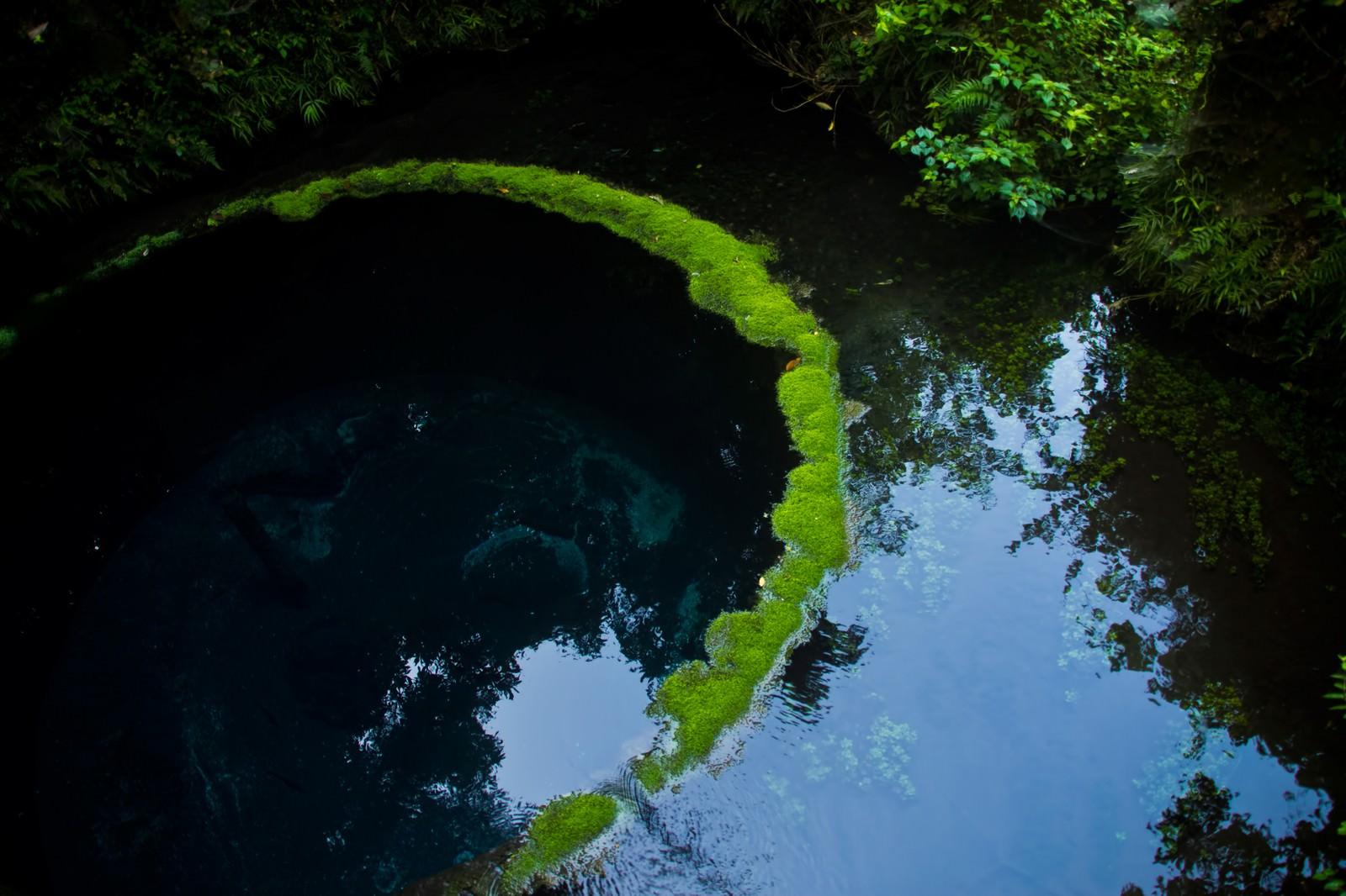 「柿田川の湧水」の写真
