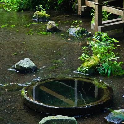 「柿田川湧水群」の写真素材