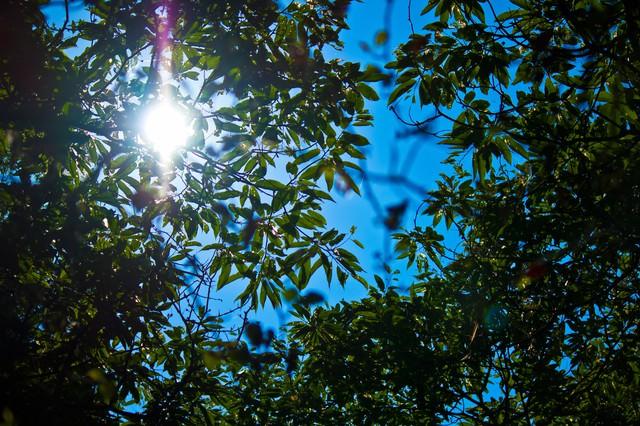 真夏の木漏れ日の写真