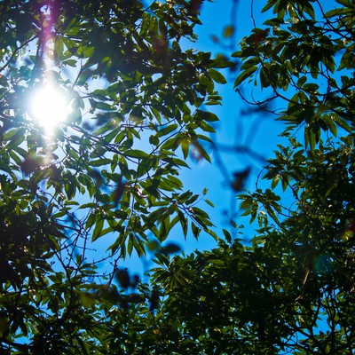「真夏の木漏れ日」の写真素材