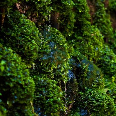 藻から滴る湧水の写真