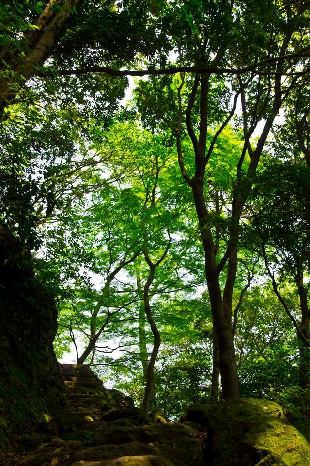 石階段と木々の写真