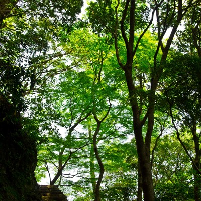 「石階段と木々」の写真素材