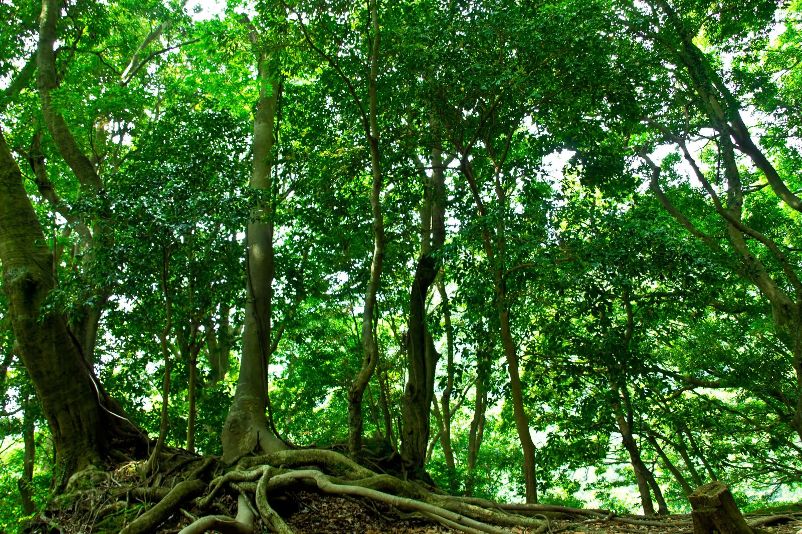 「山林の木々」の写真