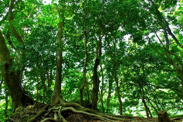 山林の木々の写真