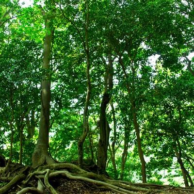 「山林の木々」の写真素材