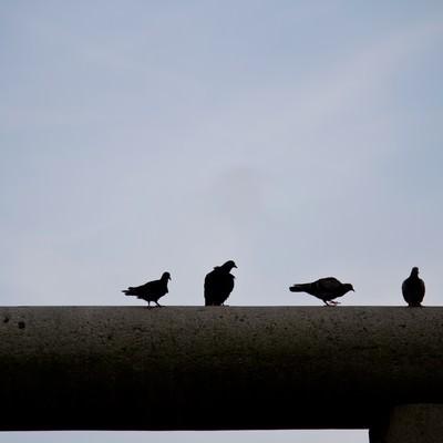 鳥居の上の鳩の写真