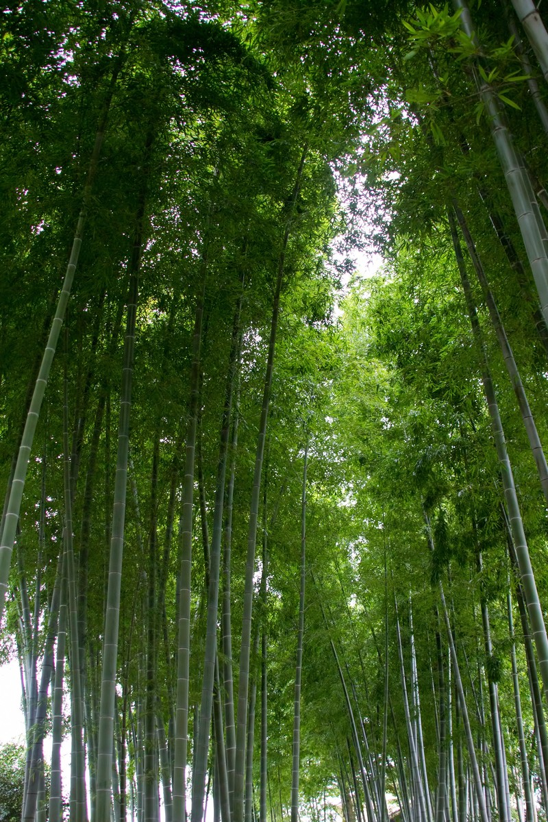 「竹林」の写真