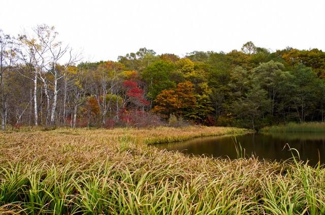 黄葉が始まった鏡池の写真