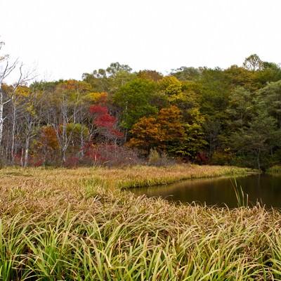 「紅葉が始まった鏡池」の写真素材