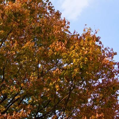 「紅葉し始め」の写真素材
