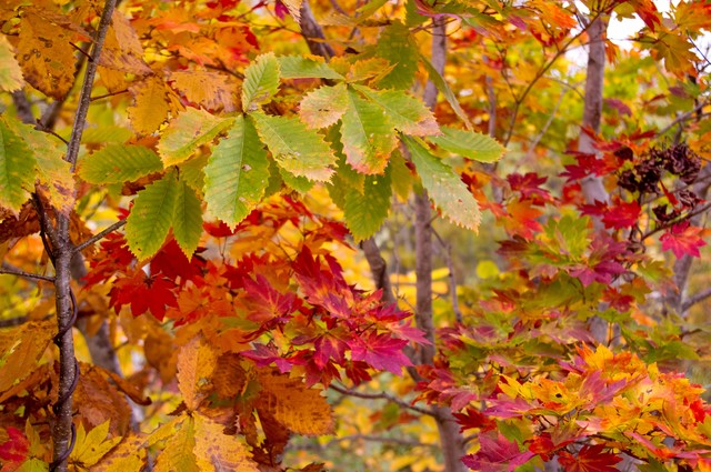 黄葉した木々の写真