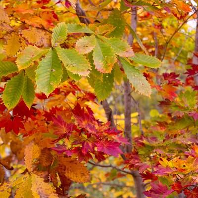 「紅葉した木々」の写真素材
