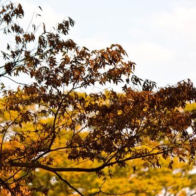 「秋の到来、紅葉した木々」の写真素材