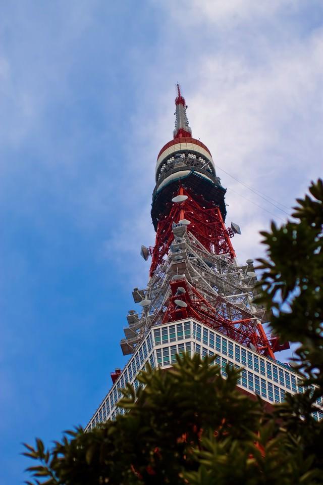 見上げる東京タワーの写真