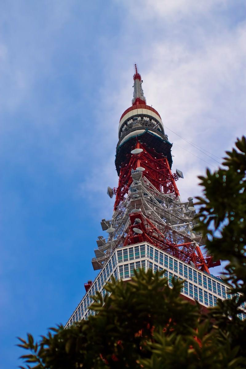 「見上げる東京タワー」の写真