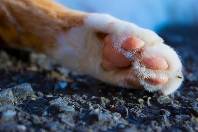 猫の肉球(猫の手)