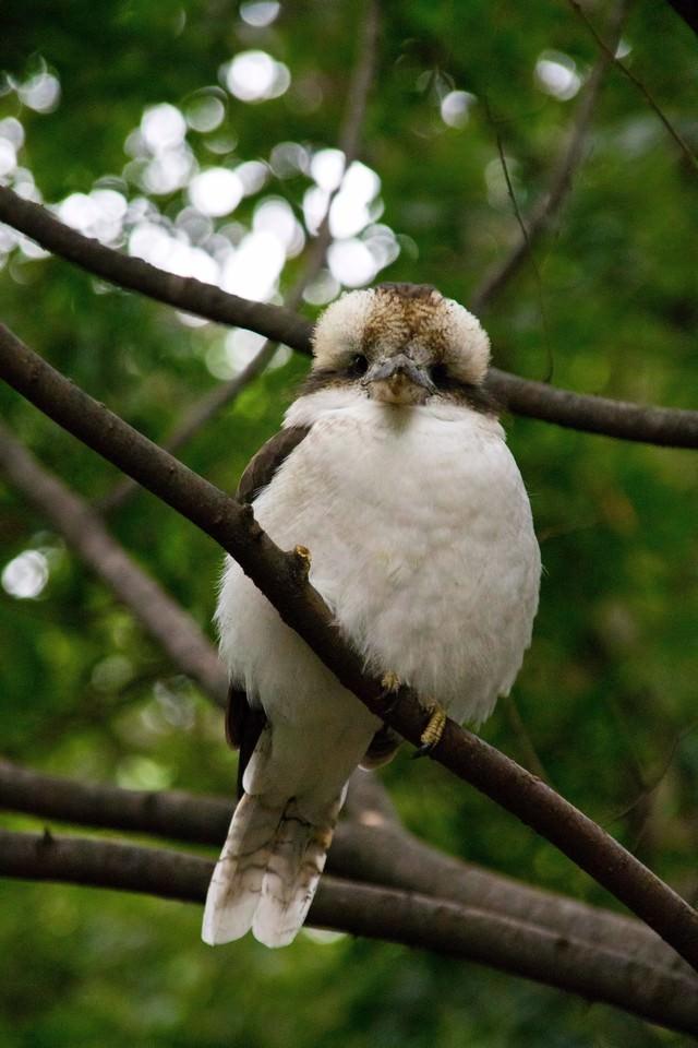 ぬいぐるみのような小鳥の写真