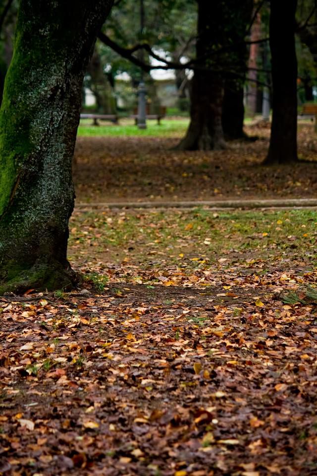 落ち葉と木々の写真