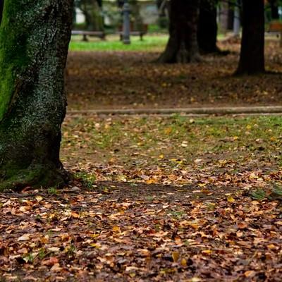 「落ち葉と木々」の写真素材
