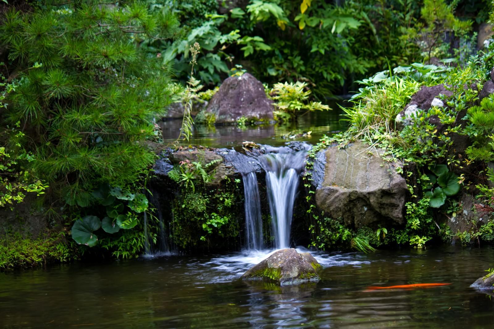 「小さな池と鯉」の写真