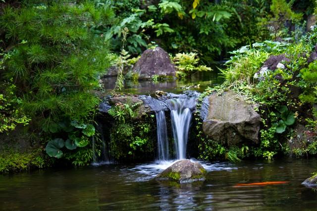 小さな池と鯉の写真