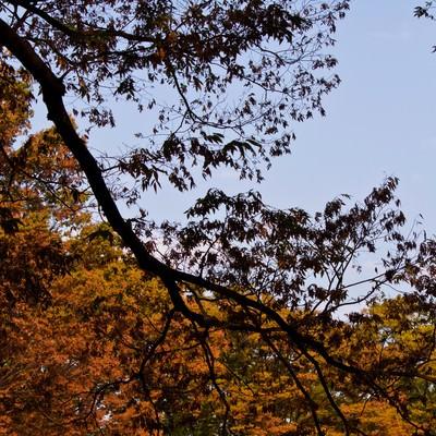 黄葉し始めた木々の写真