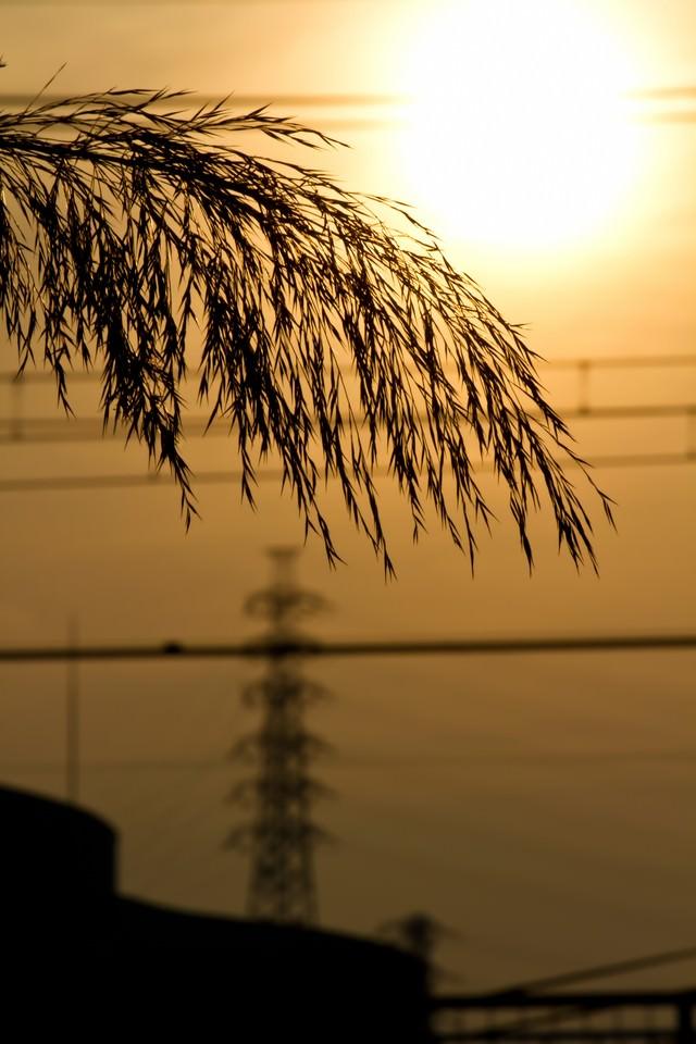 夕焼けの日差しの写真
