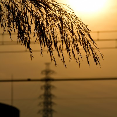 「夕焼けの日差し」の写真素材