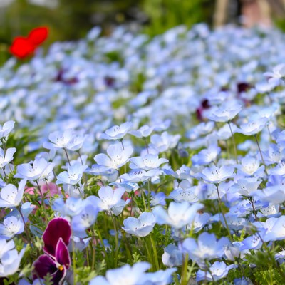 「青い花の花壇」の写真素材