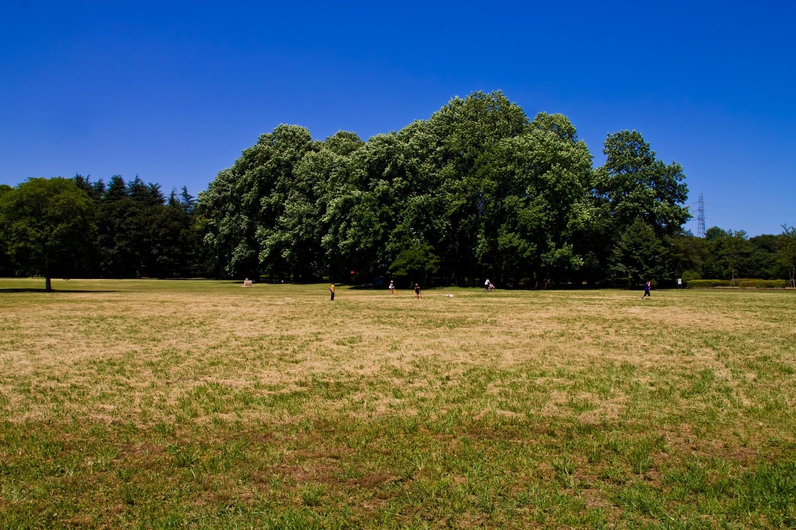 「青空と広がる公園」の写真